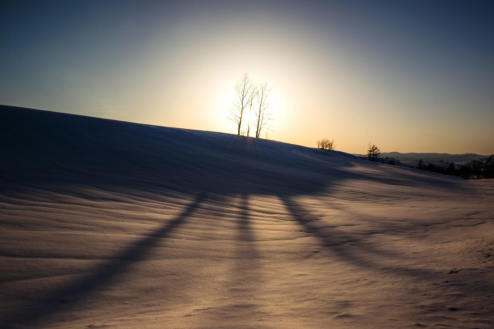 「美麗の雪原と伸びる木の陰美麗の雪原と伸びる木の陰」のフリー写真素材を拡大