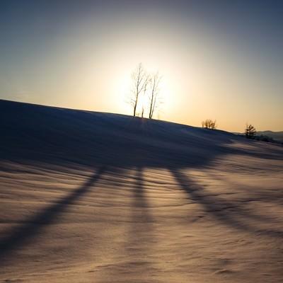 「美麗の雪原と伸びる木の陰」の写真素材