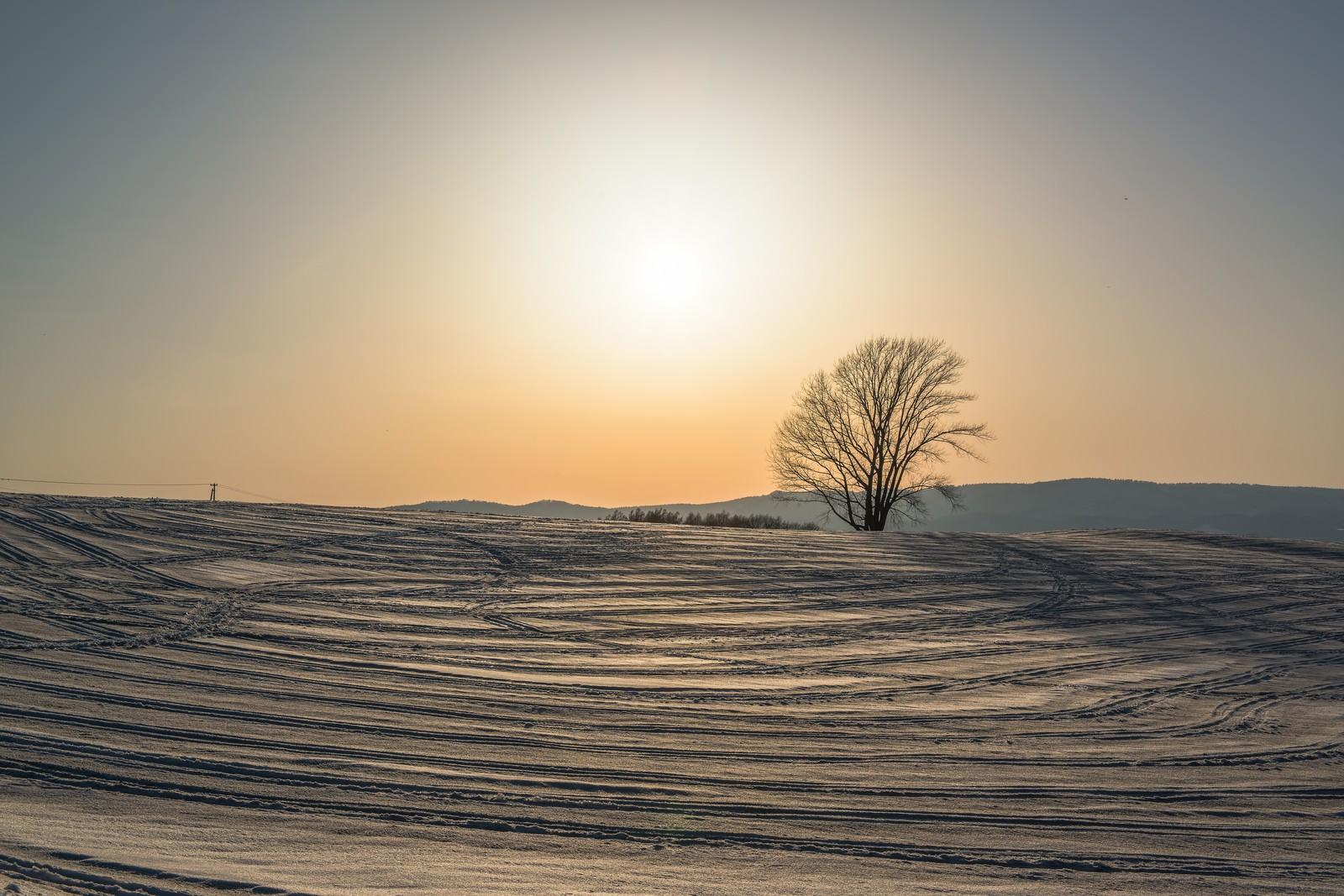 「雪の中の哲学の木雪の中の哲学の木」のフリー写真素材を拡大