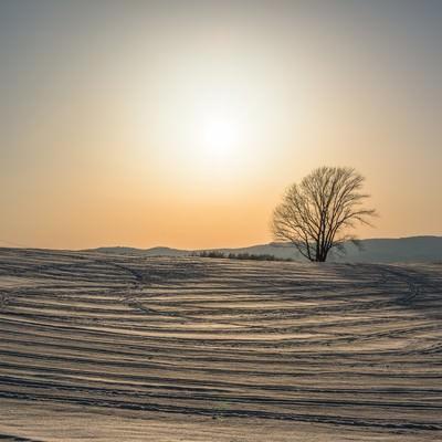 雪の中の哲学の木の写真