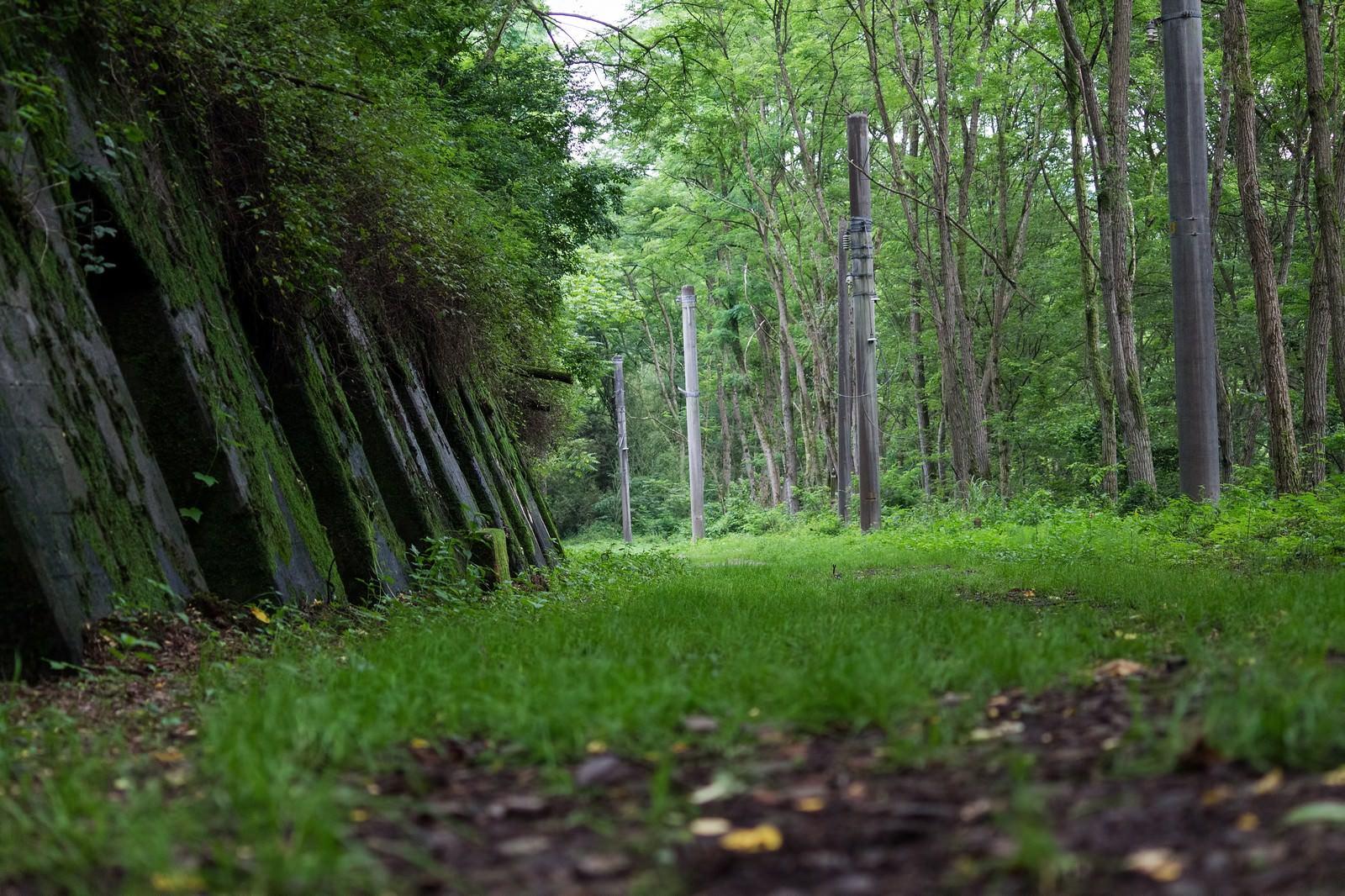 「緑が茂る廃線道」の写真