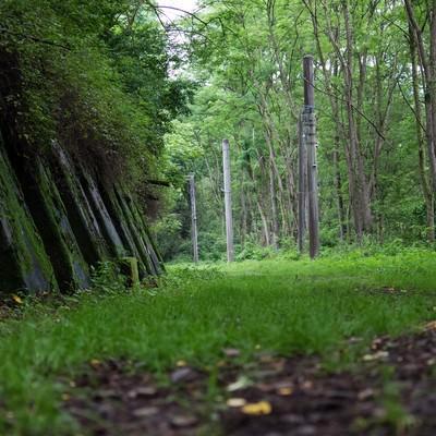 緑が茂る廃線道の写真