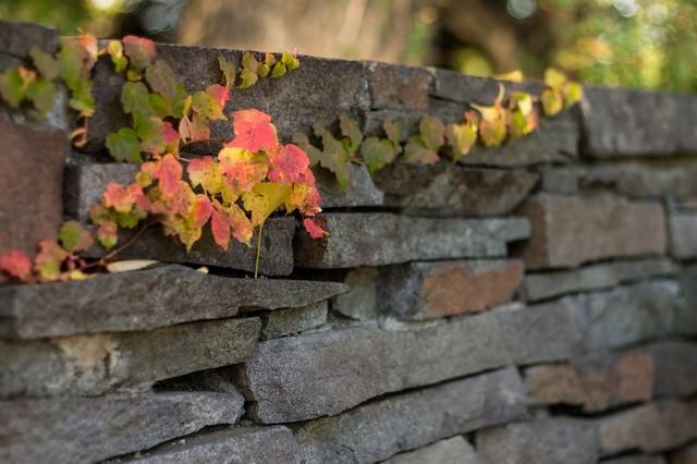 石の塀とツタの写真