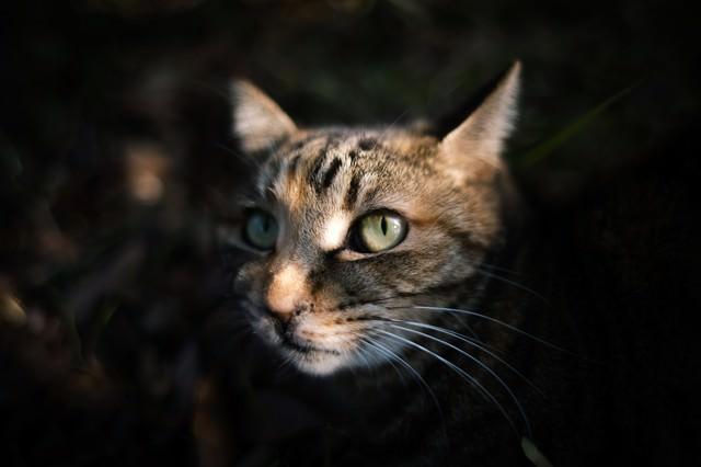 暗闇から顔を出す猫の写真