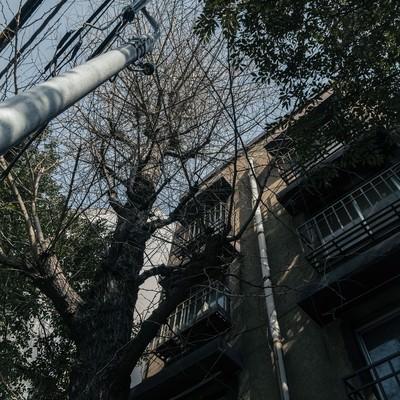 「同潤会アパート」の写真素材