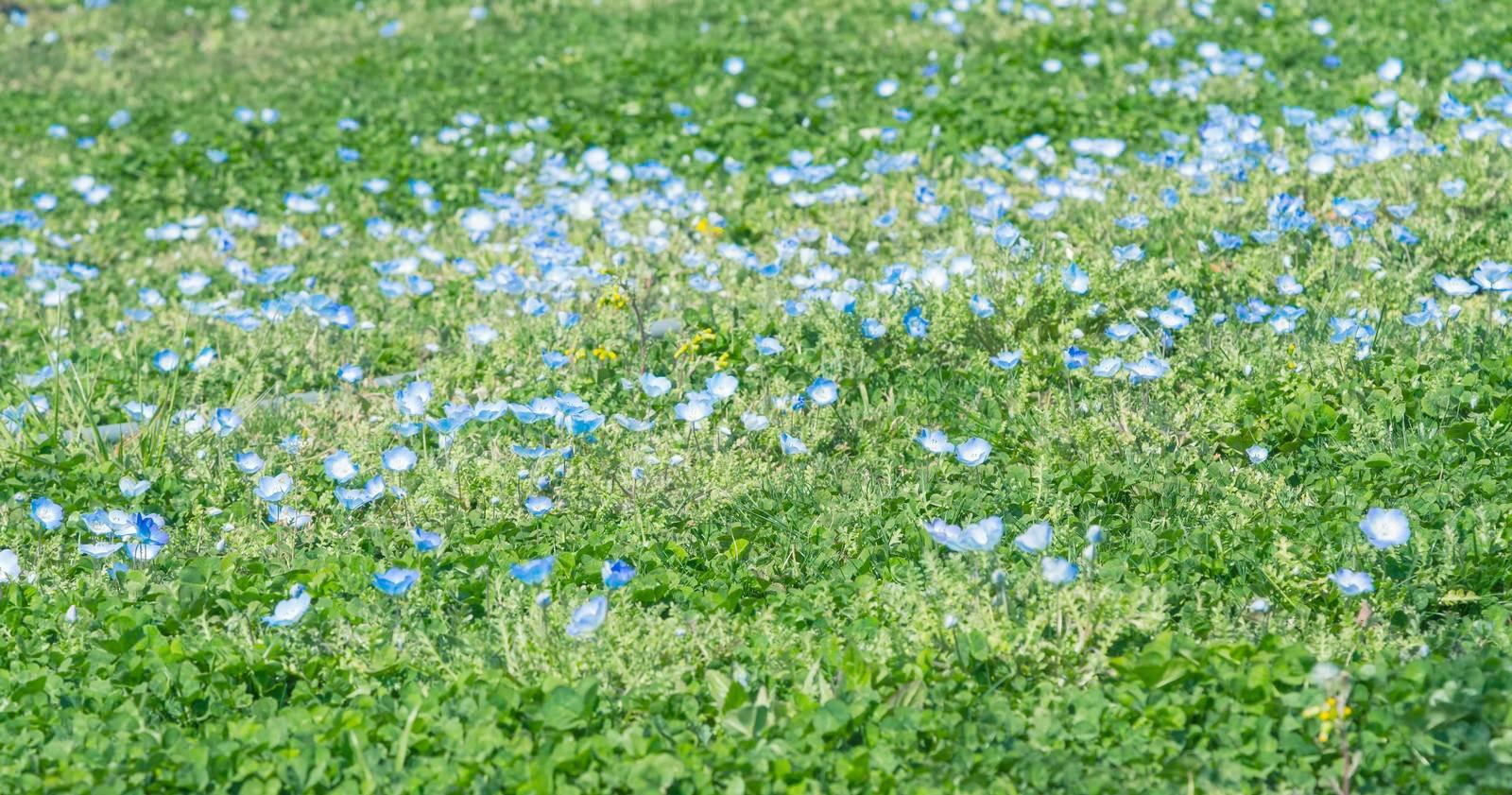 「緑とお花緑とお花」のフリー写真素材を拡大