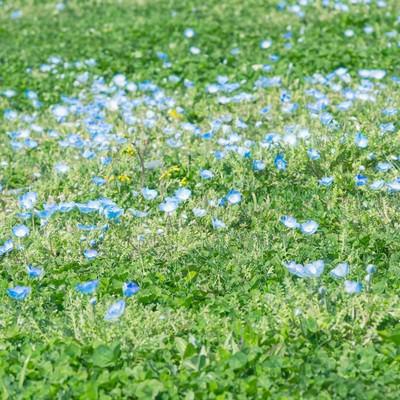 「緑とお花」の写真素材