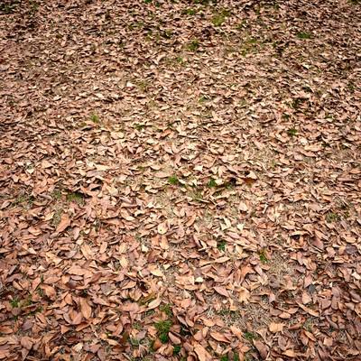 「落ち葉のテクスチャー」の写真素材