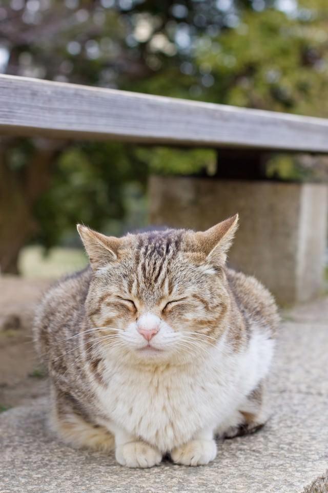 ベンチの下でうずくまる猫の写真
