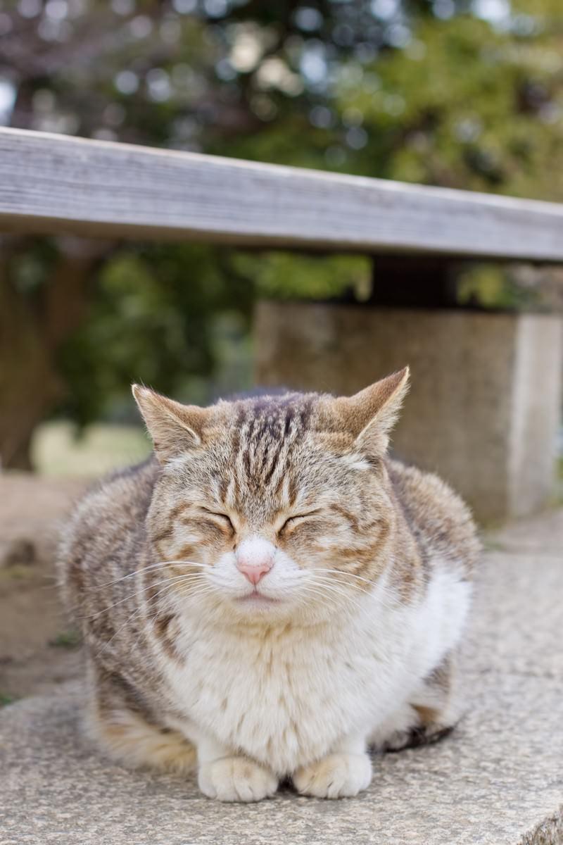「ベンチの下でうずくまる猫」の写真