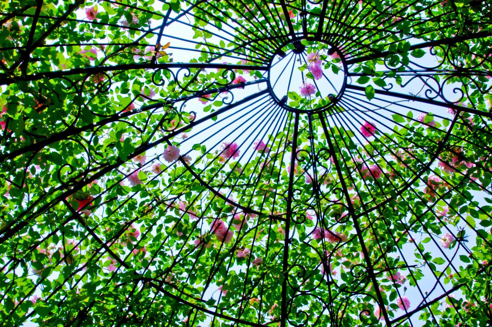 「ドーム状の中の薔薇」の写真