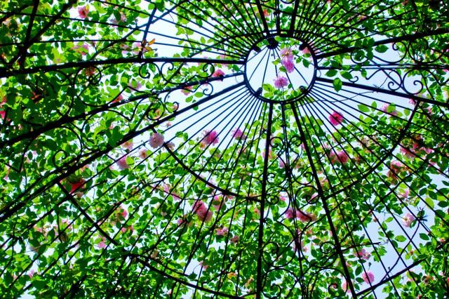 ドーム状の中の薔薇の写真