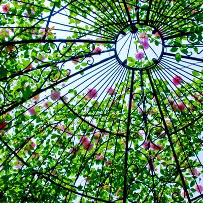 「ドーム状の中の薔薇」の写真素材
