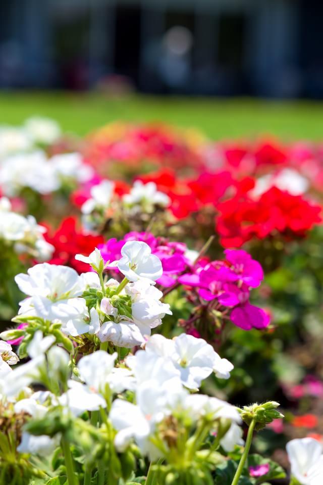 色とりどりの花壇の写真