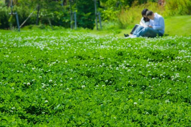 緑の中で座る恋人の写真