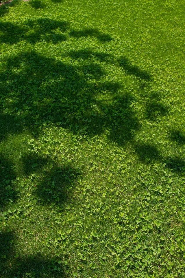 芝生と木の陰の写真