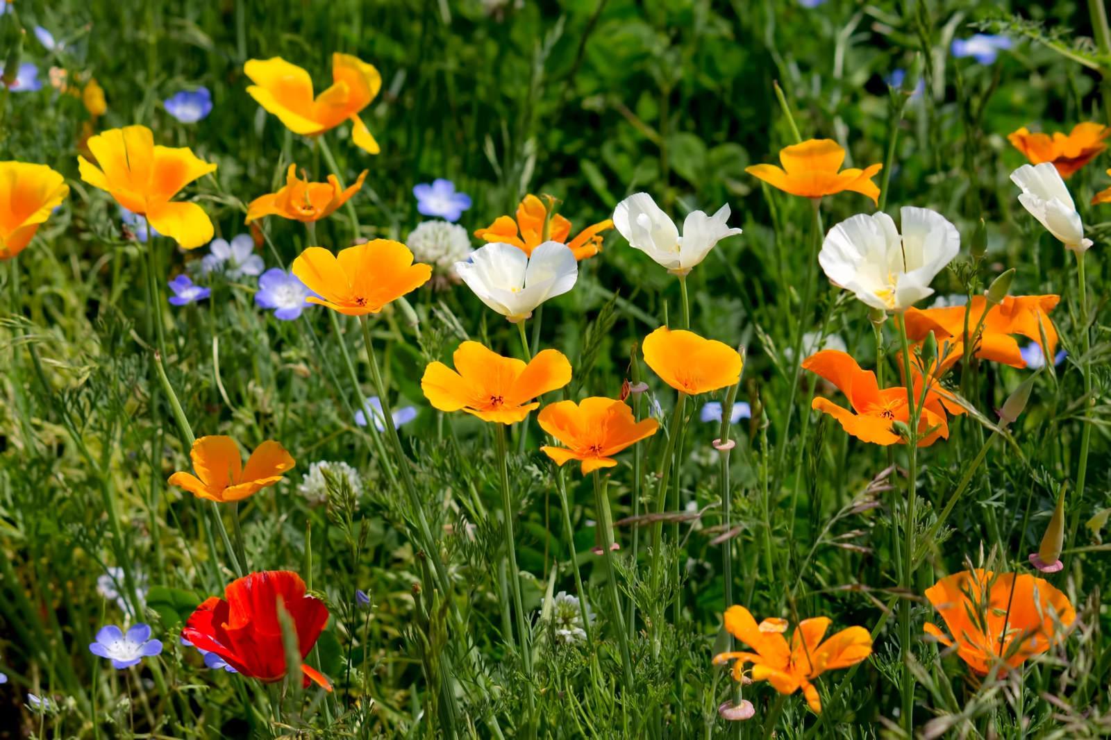「上を向いて咲く花々」の写真