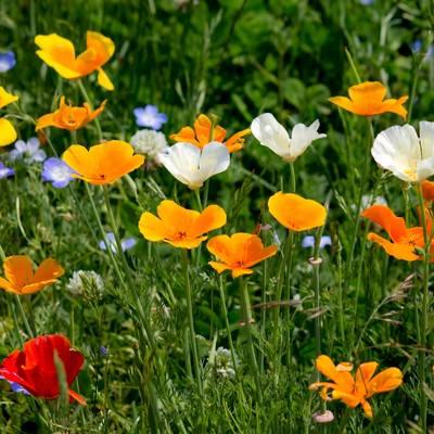 上を向いて咲く花々の写真