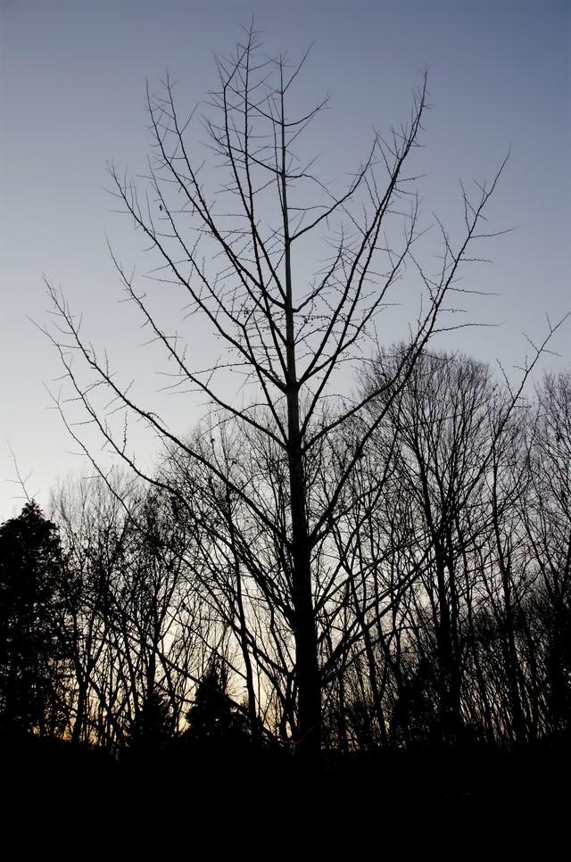裸の木の写真