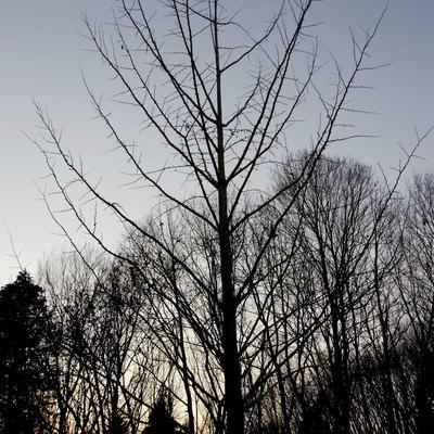 「裸の木」の写真素材