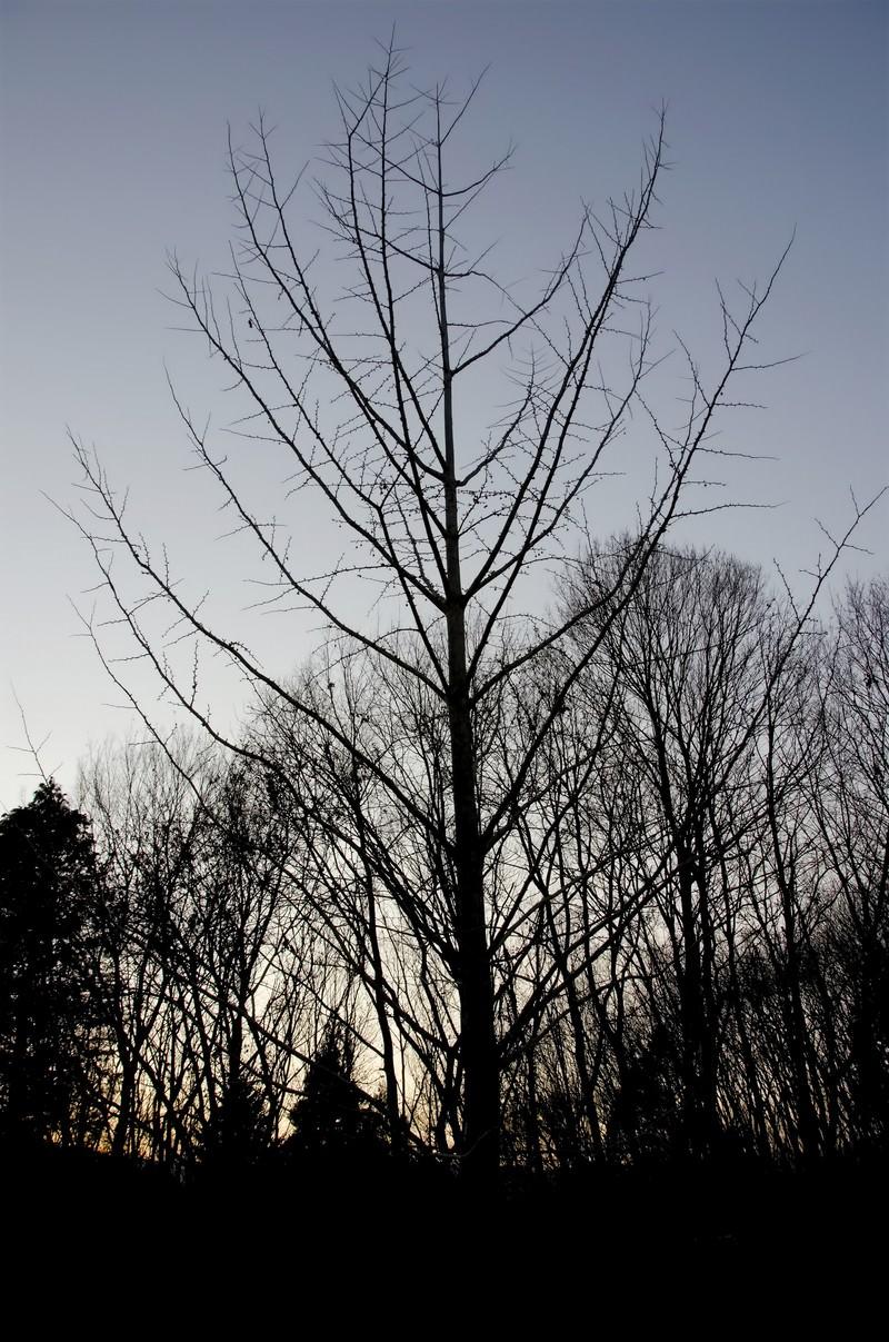 「裸の木」の写真