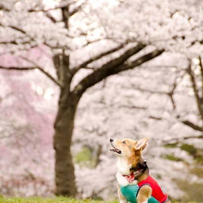 「花よりワンコ」の写真素材