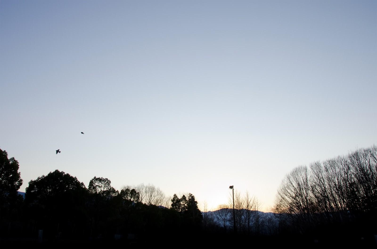 「冬空と公園」の写真