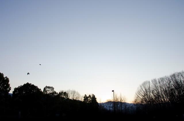 冬空と公園の写真