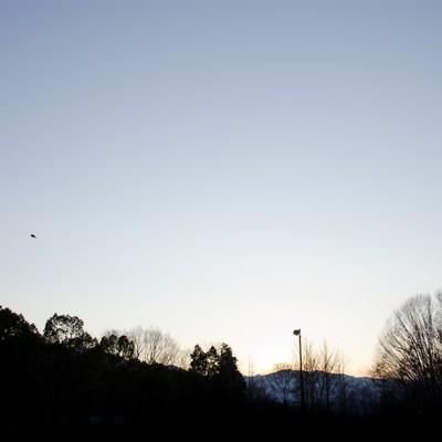 「冬空と公園」の写真素材