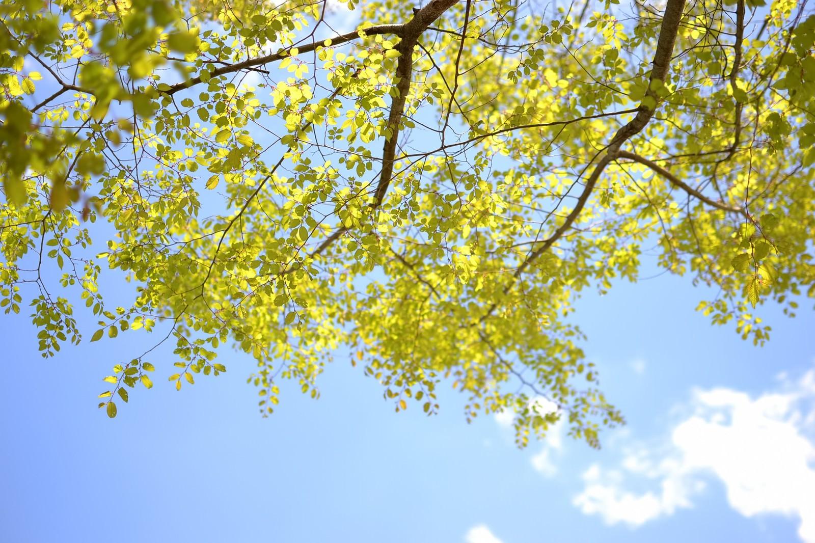 「青空と木の葉」の写真