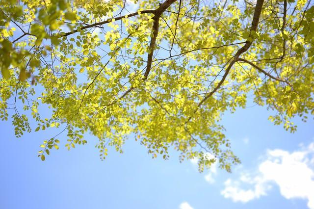 青空と木の葉の写真