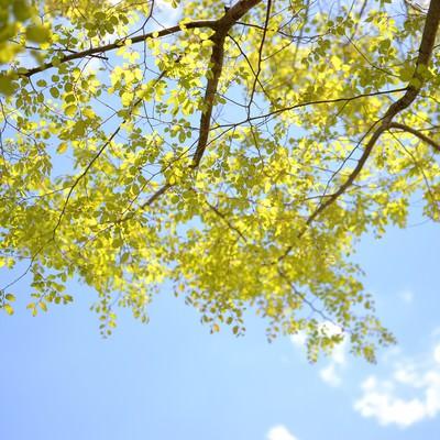 「青空と木の葉」の写真素材