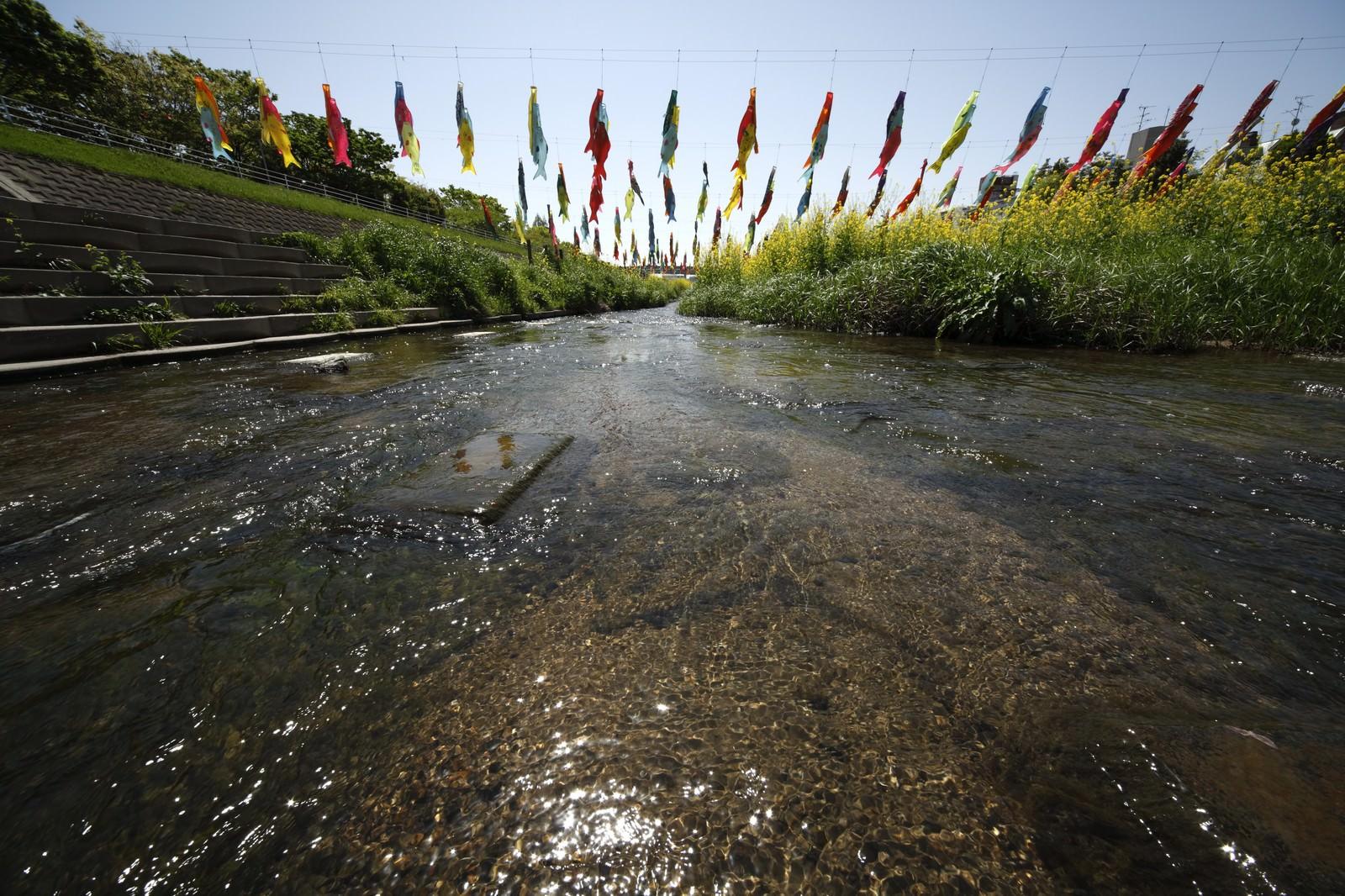 「川にかけられた鯉のぼり」の写真