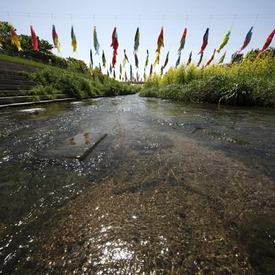 「川にかけられた鯉のぼり」の写真素材