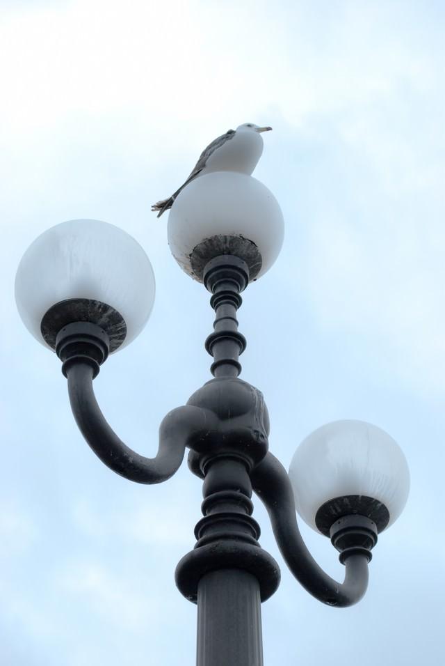 街灯に止まるカモメの写真