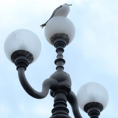 「街灯に止まるカモメ」の写真素材
