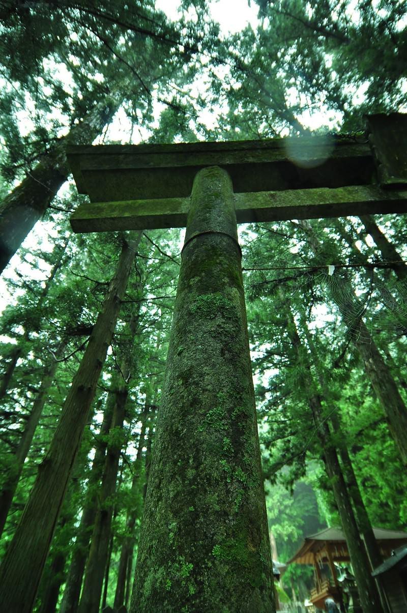 「神社の鳥居」の写真