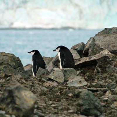 岩場のペンギン夫妻の写真