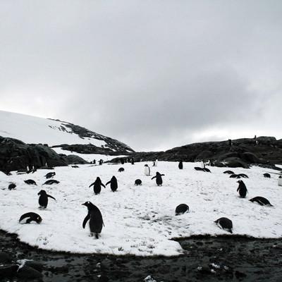 凍った坂道をよちよち歩くペンギンの群れの写真