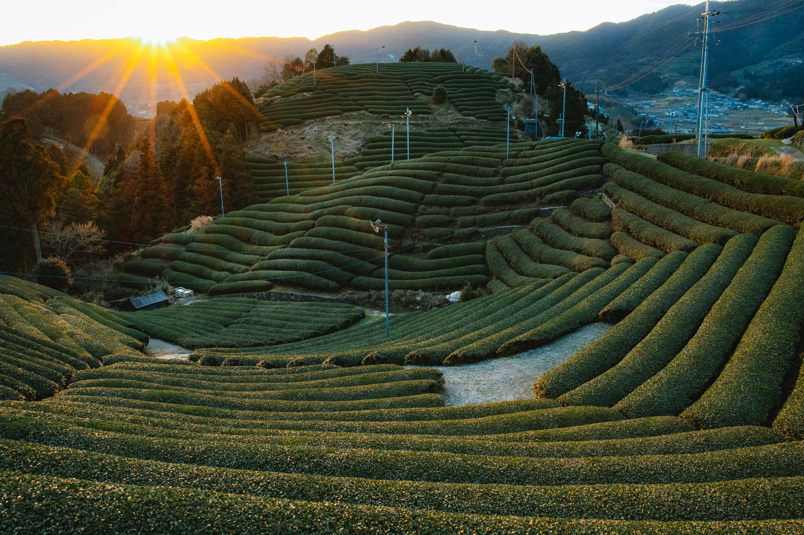 「京都和束の夕暮れ京都和束の夕暮れ」のフリー写真素材を拡大