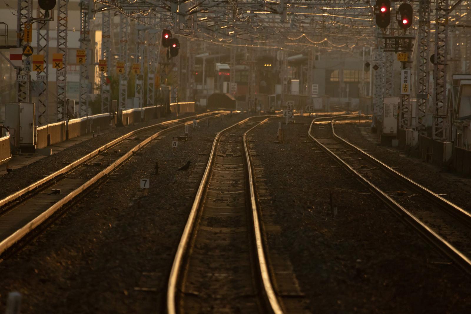 「西九条駅方面を望む(夕刻)」の写真