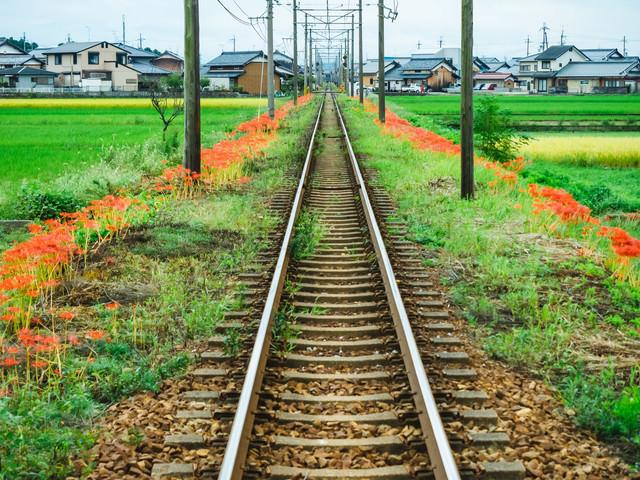 線路沿いに咲く彼岸花の写真