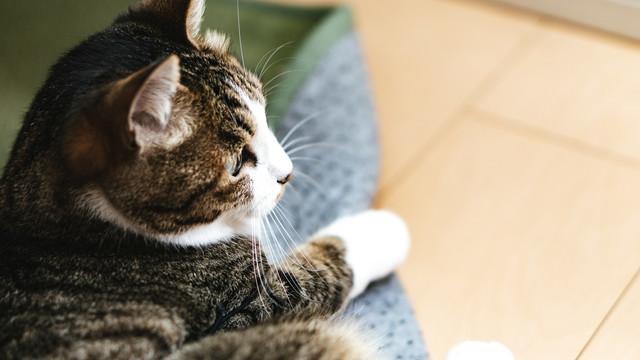遠くを見つめる子猫の写真