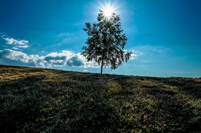 逆光と一本の木(美瑛)の写真
