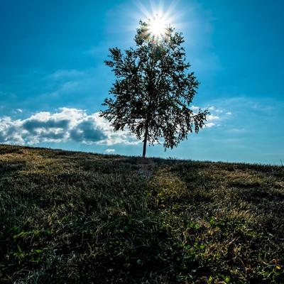 「逆光と一本の木(美瑛)」の写真素材
