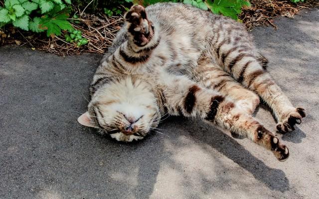 寝転ぶ猫の写真