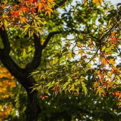 色づき始めた葉の写真