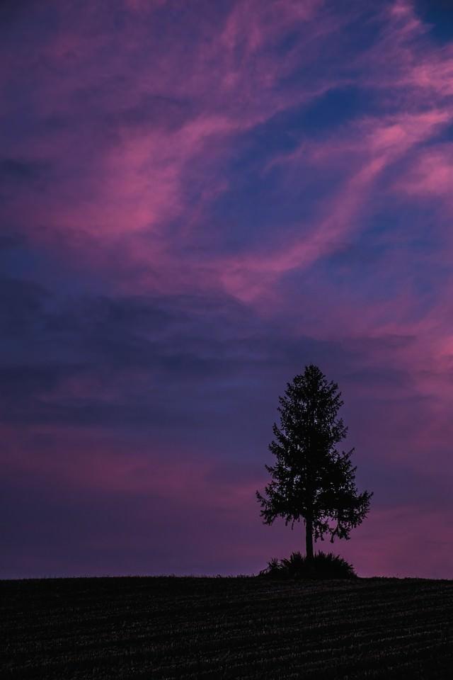 禍々しい空と一本の木の写真