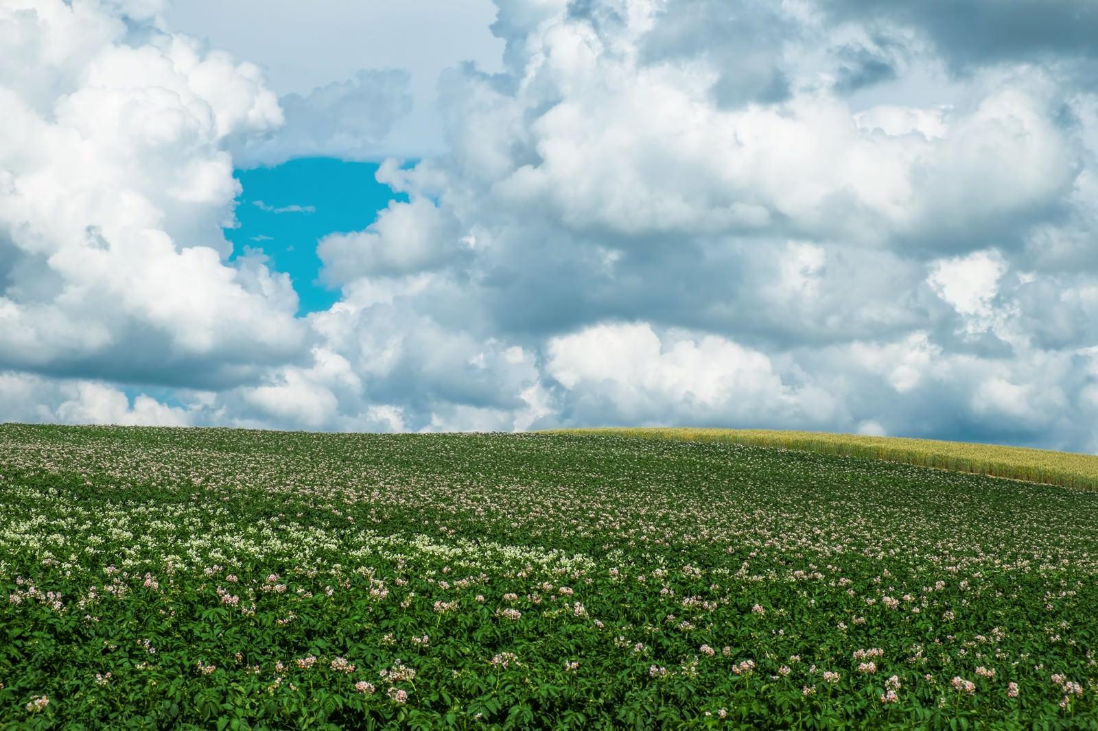 「北海道の大地北海道の大地」のフリー写真素材を拡大