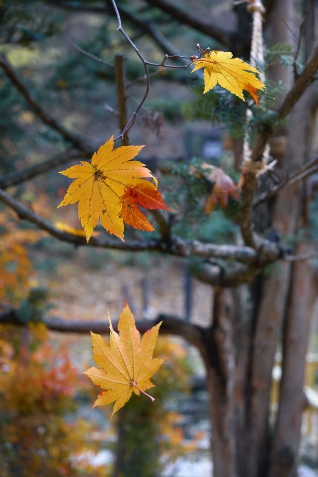 散りゆく葉の写真